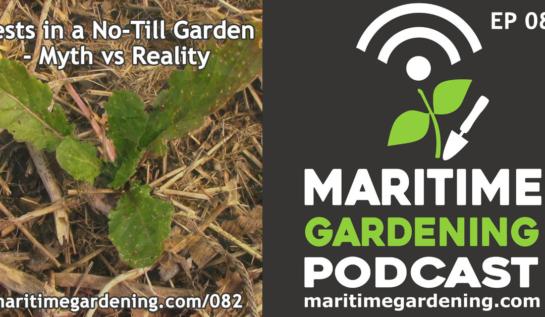 Maritime Gardening: Pests in a No-Till Garden – Myth vs Reality
