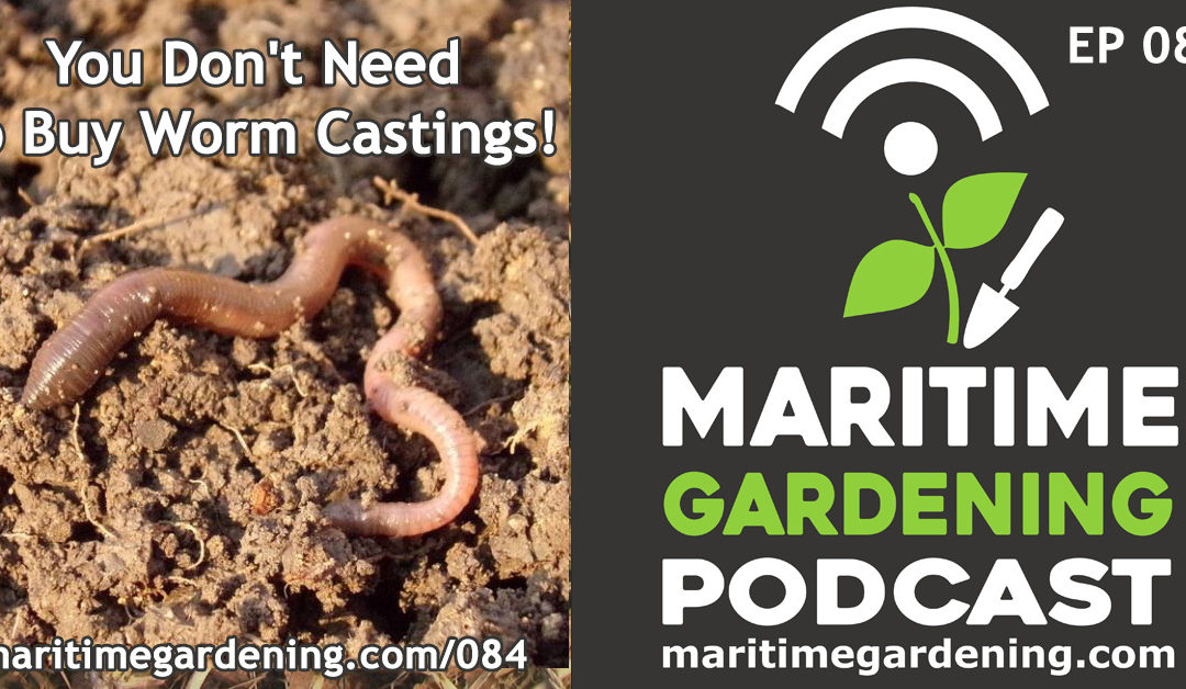 Maritime Gardening: You Don't Need to Buy Worm Castings!