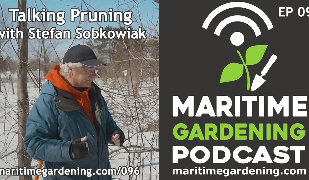 Maritime Gardening: Talking Pruning with Stefan Sobkowiak