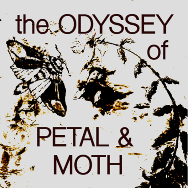 The Odyssey of Petal & Moth