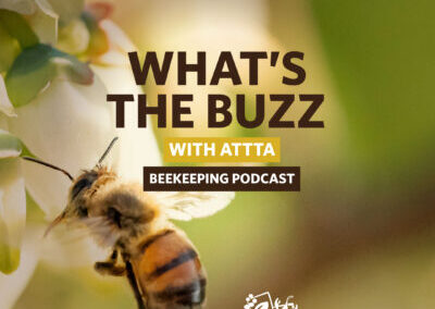 WHAT'S THE BUZZ WITH ATTTA